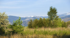 Escena salvaje de la pradera con las montañas distantes Foto de archivo