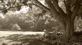 escena Sepia-entonada del parque Imágenes de archivo libres de regalías