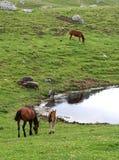 Escena serena de la montaña con los animales del campo Imágenes de archivo libres de regalías