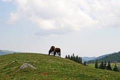 Escena serena de la montaña con los animales del campo Fotos de archivo