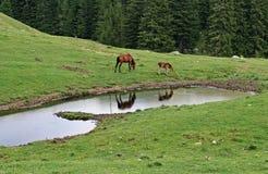Escena serena de la montaña con los animales del campo Foto de archivo libre de regalías