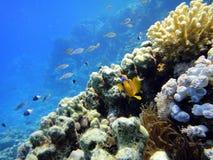 Escena subacuática Fotos de archivo libres de regalías