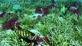 Escena subacuática Foto de archivo libre de regalías