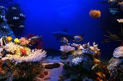 Escena subacuática Fotos de archivo