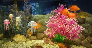 Escena subacuática, arrecife de coral, pescados coloridos y jalea en el océano Imágenes de archivo libres de regalías