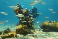 Escena subacuática con el snorkeler que mira vida marina Imágenes de archivo libres de regalías