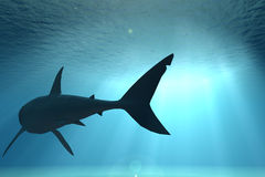 Escena subacuática con el tiburón ilustración del vector
