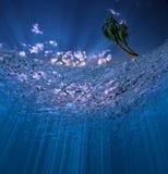 Escena subacuática con las palmas Foto de archivo libre de regalías