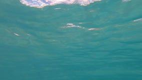 Escena subacuática del fondo almacen de video