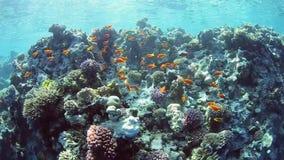 Escena subacuática del lanscape en un arrecife de coral almacen de metraje de vídeo