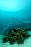 Escena subacuática que enseña el equipo de submarinismo de Aceh Indonesia de los pescados foto de archivo
