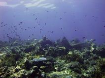 Escena subacuática tropical foto de archivo