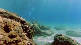 Escena subacu?tica con la estatua en la parte inferior del mar y de varios buceadores metrajes