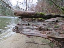 Escena superior del río de Snoqualmie, parque de estado de Olallie Fotografía de archivo