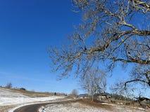 Escena temprana del árbol y del cielo del invierno Imagenes de archivo