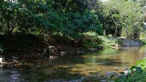 Escena tranquila del agua de la corriente que fluye en naturaleza almacen de metraje de vídeo