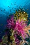 Escena tropical colorida del filón Imagen de archivo libre de regalías