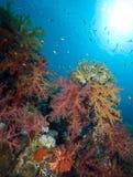 Escena tropical colorida del filón con los corales florales Fotografía de archivo
