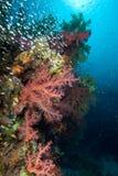 Escena tropical colorida del filón con los corales florales Imagen de archivo
