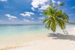Escena tropical de la playa que sorprende Palmera con el oscilación, día de verano, paisaje tropical Concepto de la playa de las  fotos de archivo libres de regalías