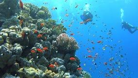 Escena tropical del arrecife de coral con los bajíos de pescados almacen de metraje de vídeo