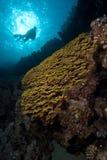 Escena tropical del filón Foto de archivo