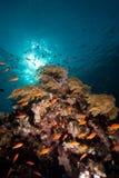 Escena tropical del filón Fotografía de archivo libre de regalías