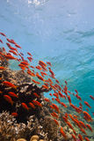 Escena tropical del filón Fotografía de archivo