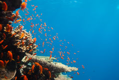 Escena tropical del filón Imagen de archivo