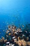 Escena tropical del filón coralino. Fotos de archivo