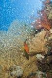 Escena tropical del filón coralino. Fotografía de archivo libre de regalías