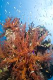 Escena tropical subacuática colorida del filón. Foto de archivo