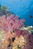 Escena tropical vibrante del filón. Imagen de archivo libre de regalías