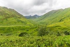 Escena verde de la montaña de la tundra en Alaska fotografía de archivo libre de regalías