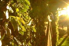 Escenario de la puesta del sol con las chispas amarillas Imagen de archivo libre de regalías
