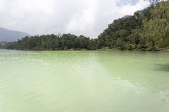 Escenario tropical salvaje genérico Imagen de archivo libre de regalías