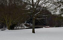 Escenas de la nieve en Escocia foto de archivo