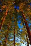 Escenas de la noche del jardín Fotografía de archivo libre de regalías