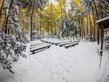 Escenas del invierno en el parque de estado del sur de la montaña en Carolina del Norte Fotografía de archivo libre de regalías