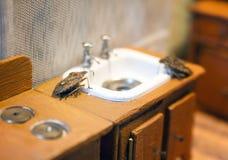 Escenas a partir de la vida de la familia del insecto Fotografía de archivo