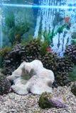 Escenas subacuáticas Fotografía de archivo libre de regalías