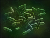 Escherichia coli Image stock