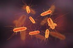 Escherichia- Colibakterie stock abbildung