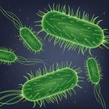 Escherichia- Colibakterien-Kolonien-realistischer Vektor vektor abbildung