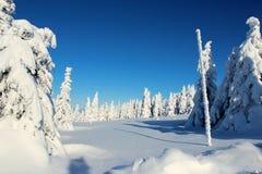 Esclarecimento coberto de neve cercado por árvores Imagens de Stock