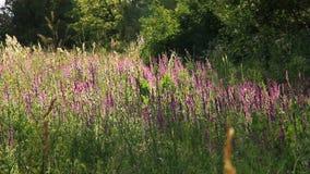 Esclarecimento da floresta na flor video estoque