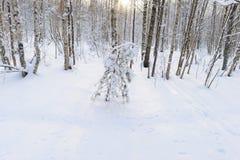 Esclarecimento da floresta na neve branca com sombras em um sol da manhã do inverno Imagens de Stock