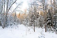 Esclarecimento da floresta no inverno Fotos de Stock
