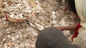 Esclavitud en Asia Trabajadores inexpertos Explotación minera de la mica La India almacen de video