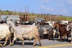 Escoa no ade do ` do Mas, Altos do Golán, Israel norte imagens de stock